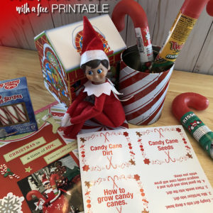 Elf on the Shelf idea Candy cane Garden